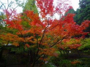 2016年11月永光寺の紅葉